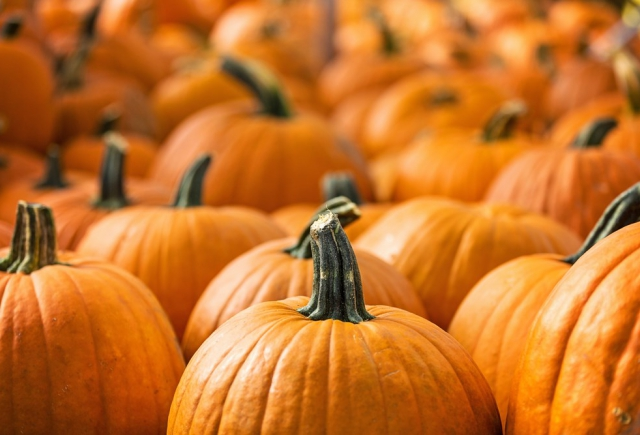 FALL FUN IN CASTLE HILLS: FALL FESTIVAL REMINDER
